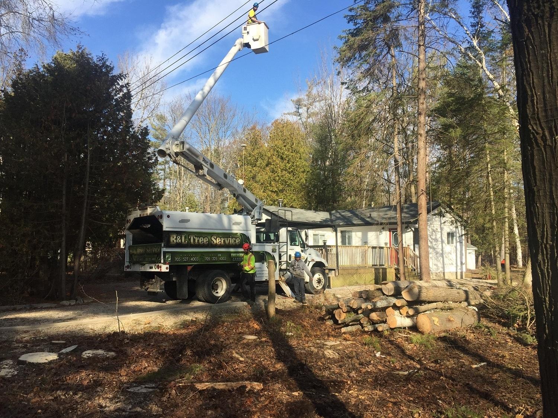 B & L Tree Service in Midland