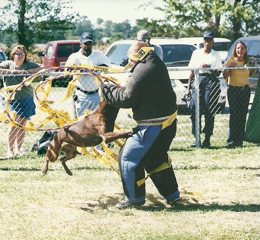 Service Dog Training Houston Texas