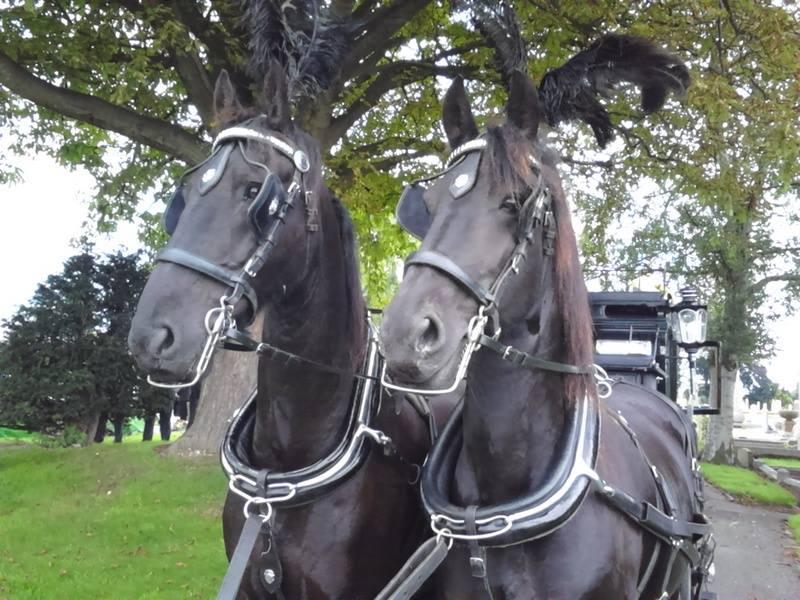 Snailriver Horse Drawn Carriage Co
