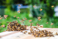 Bee/ wasp removal, and ant treatment program available.