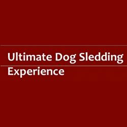 Ultimate Dog Sledding Experience image 3