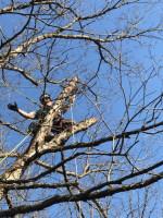 Image 3 | Hurt Tree Service