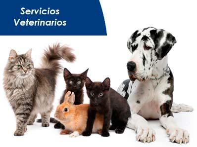 Hospital Veterinario SOS Animal