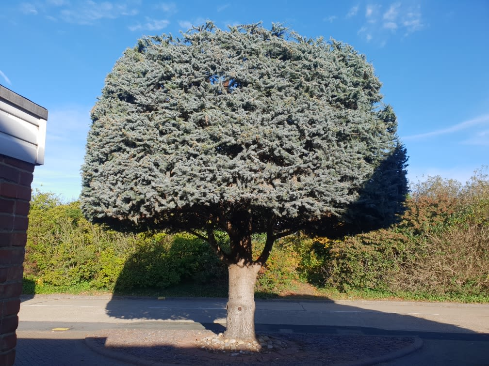 Cedarwood Tree Specialists Horticultural And