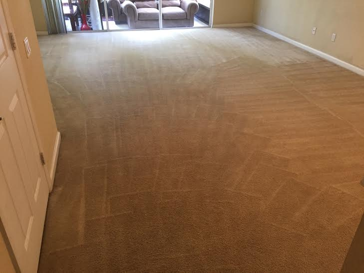 The Original Orlando Carpet Cleaning Company Coupons Near