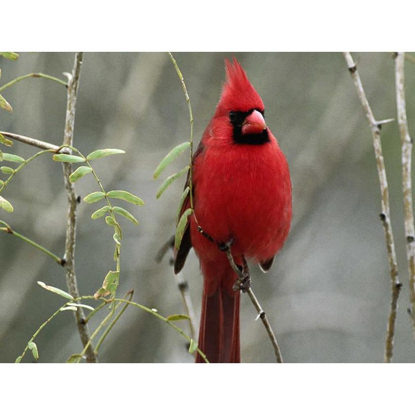 Cardinal Advisors