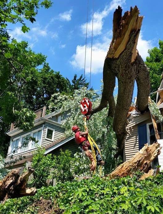 Mr. Z's Tree Service Llc