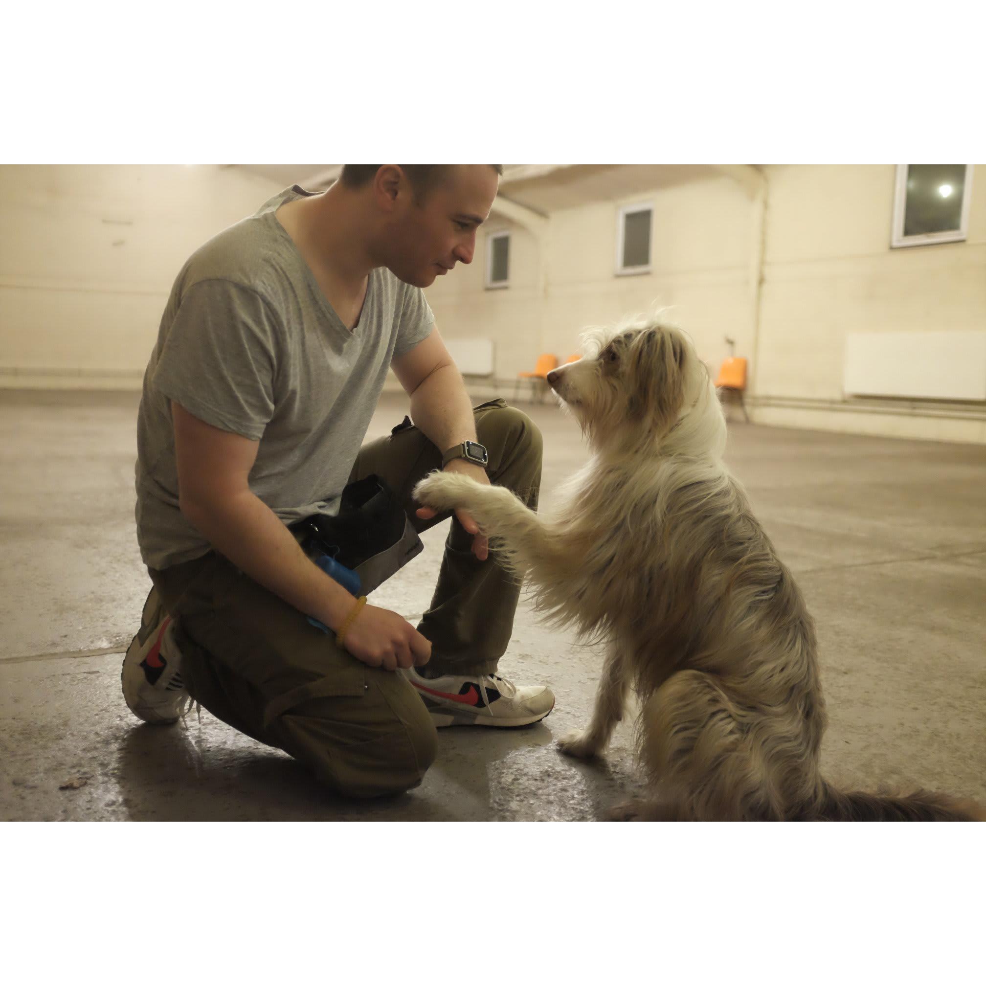 Billericay Dog Training School