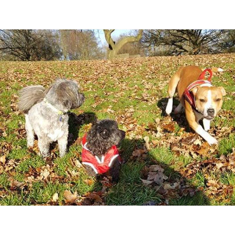 Richards Dog Walking & Pet Services - Scarborough, North Yorkshire YO12 7NF - 07478 080448 | ShowMeLocal.com