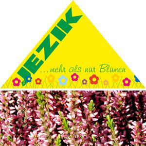 Blumen Jezik