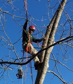 Images Georgian Tree Experts