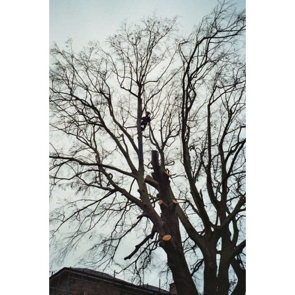 M J Green Treework - Colchester, Essex CO7 9PB - 07771 638067 | ShowMeLocal.com