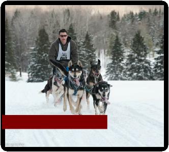 Ultimate Dog Sledding Experience image 2