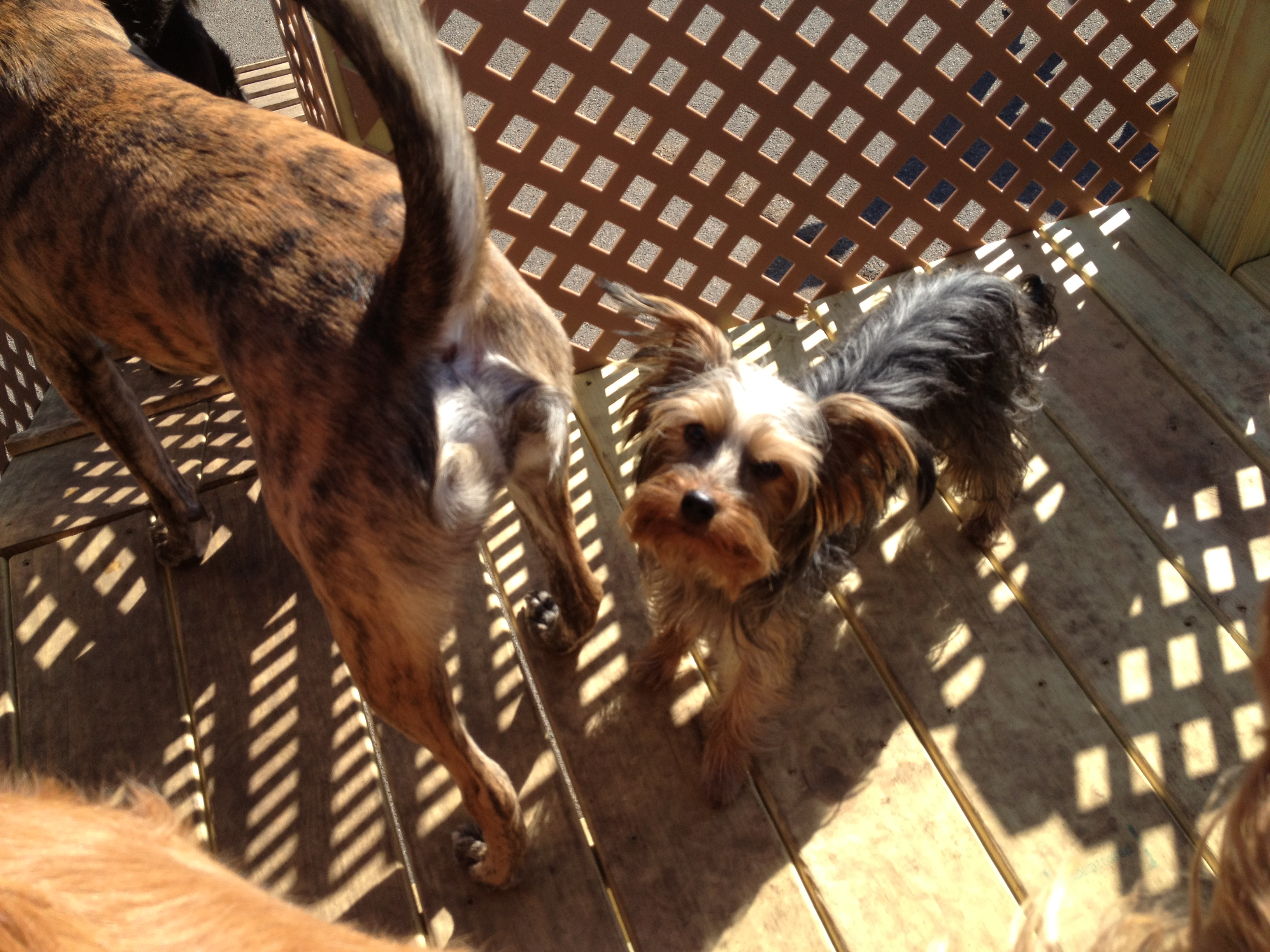 Dog Boarding Cottage Grove Mn Stewart S Country Kennels