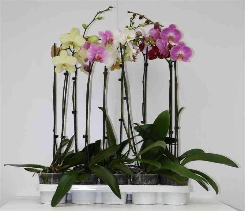 BS Plants BV