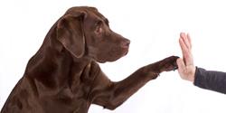 4 Paws DogWorks image 1