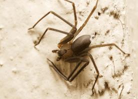 Crowder Pest Services