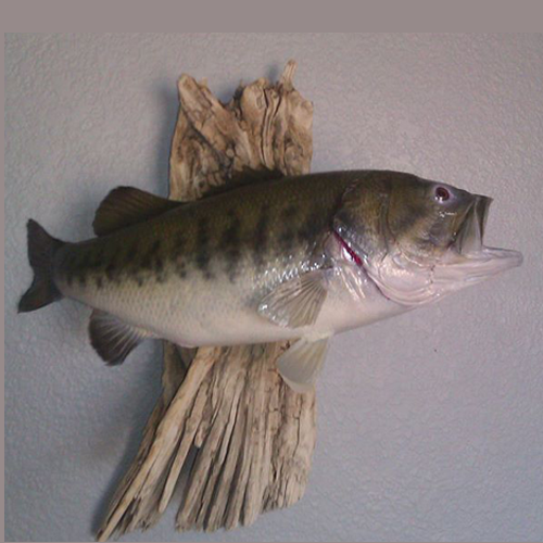 Above And Beyond Taxidermy LLC