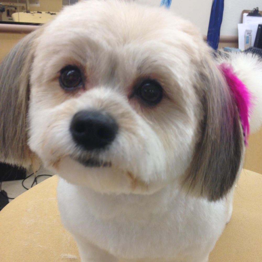 All  Dogs Grooming Blaine Mn