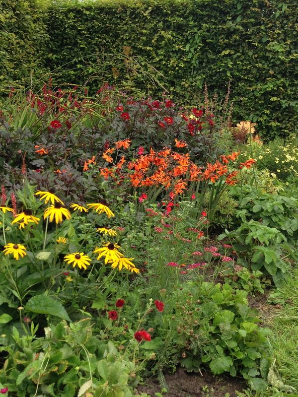 Rode Pimpernel Vaste Plantenkwekerij -Tuinontwerp De