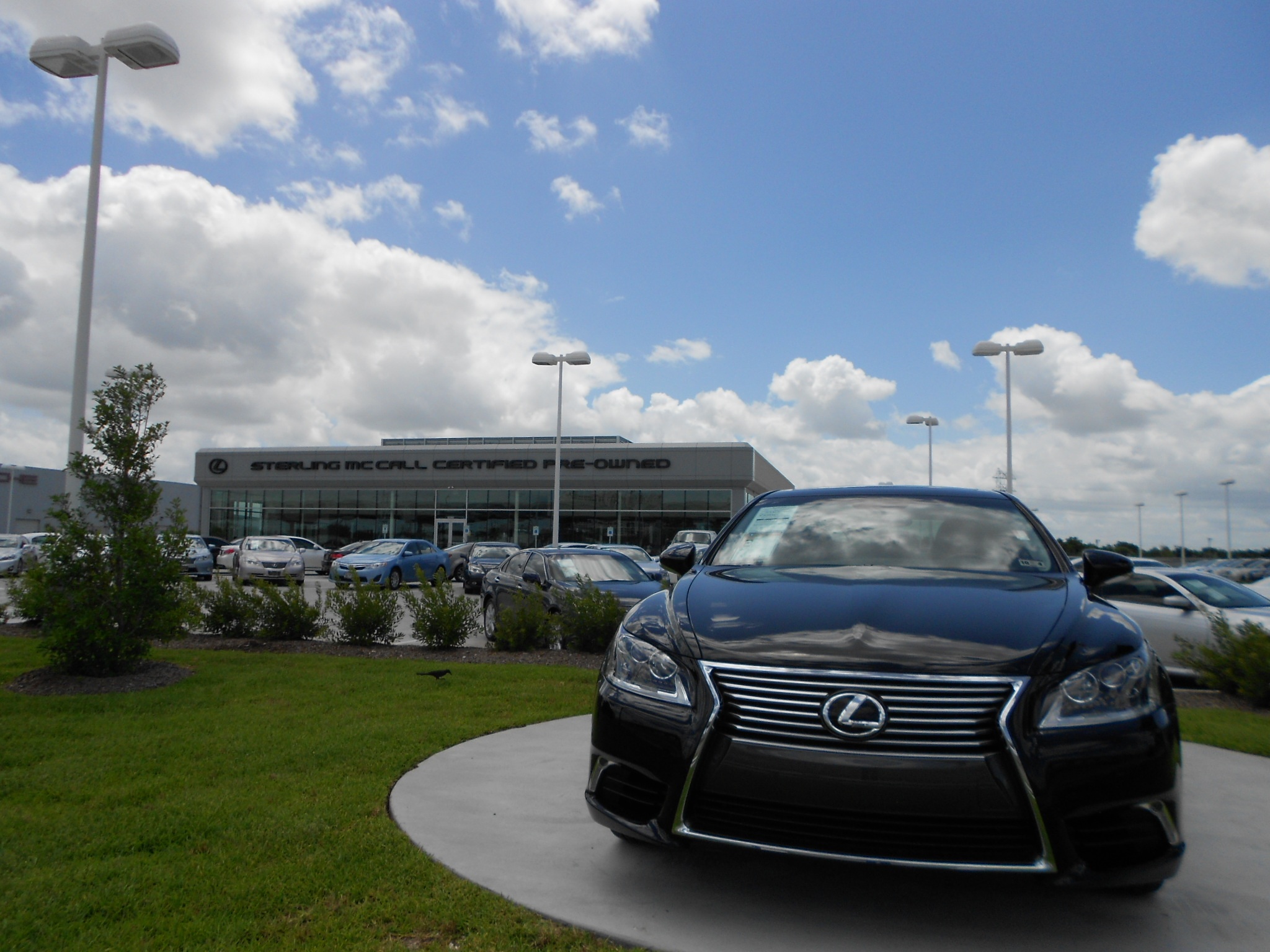 Sterling mccall lexus service coupons