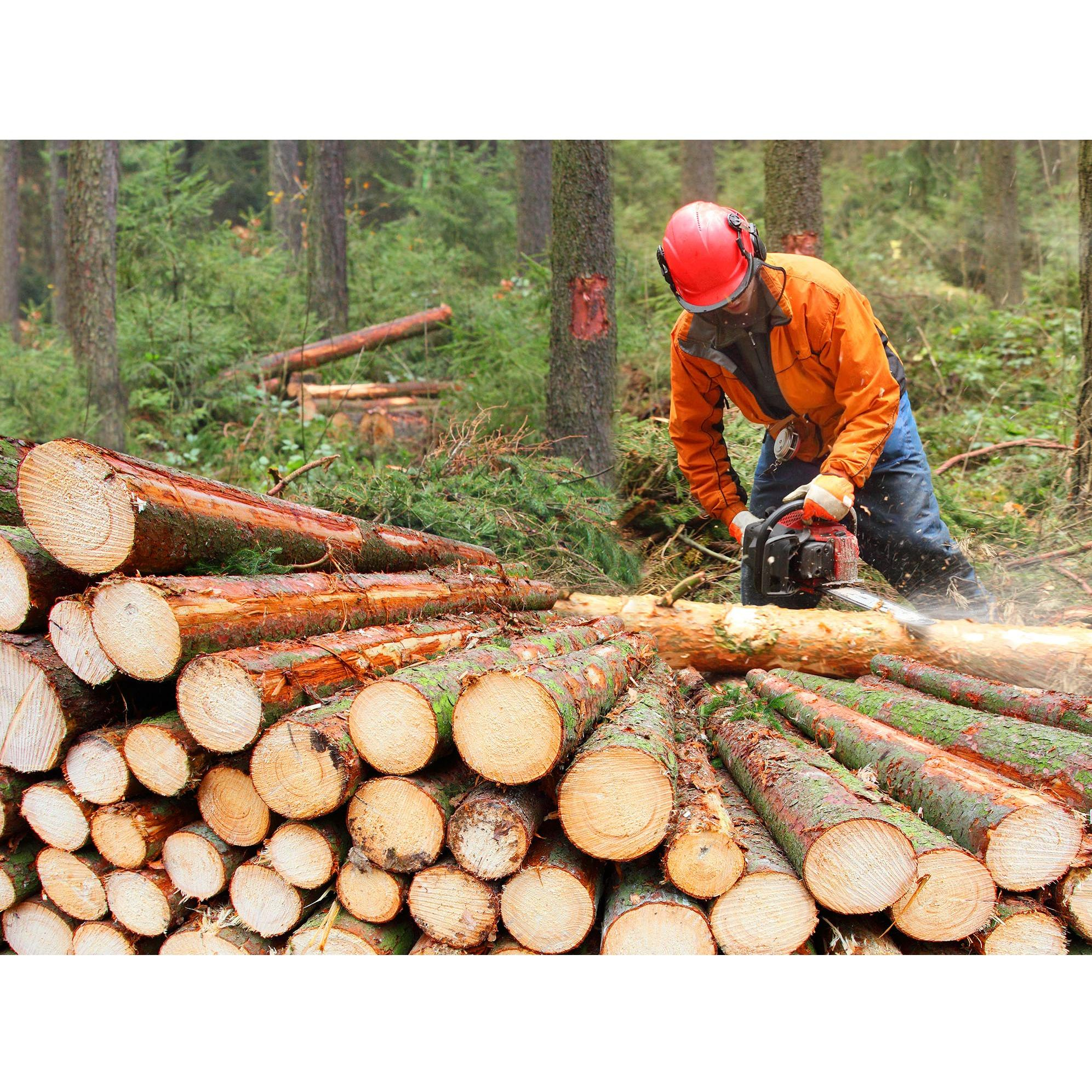 Nadeau Logging and Tree Removal Services