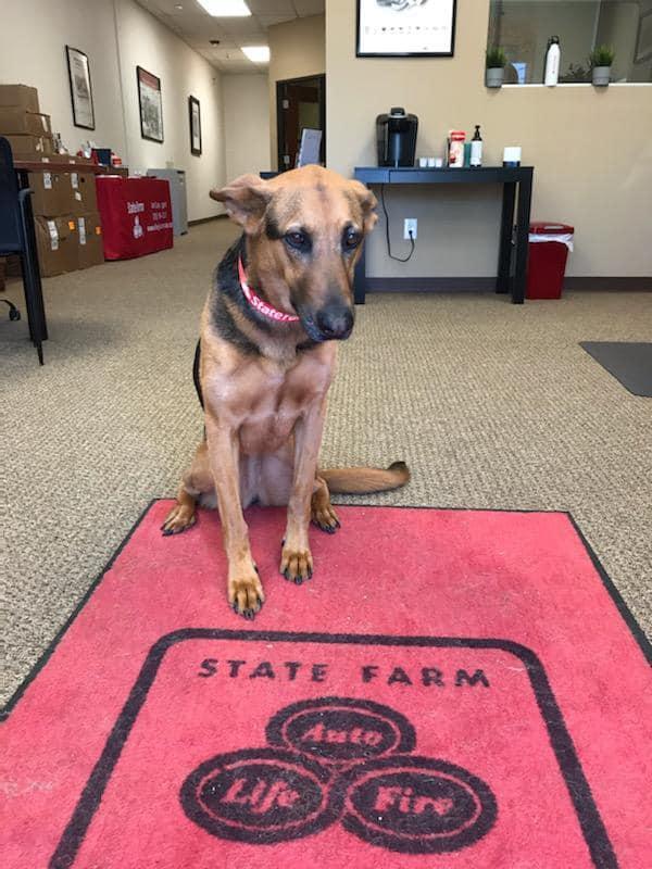 Matt Lolley - State Farm Insurance Agent