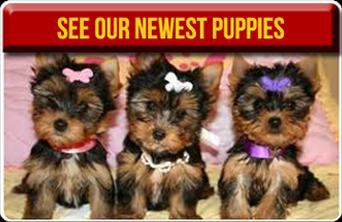 American Dog Club image 2