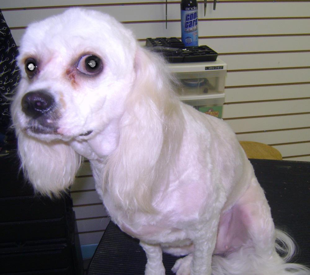 Dog Grooming Sarasota
