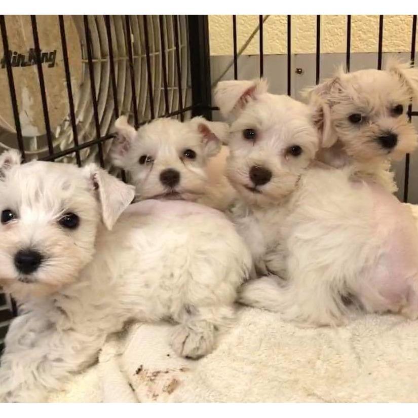 All 4 Pets - Ruidoso, NM - Pet Grooming