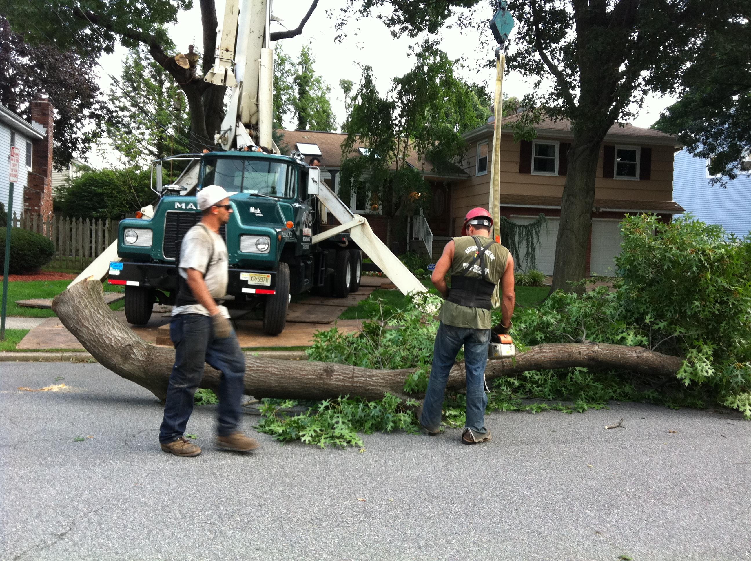 Nature Tree Service