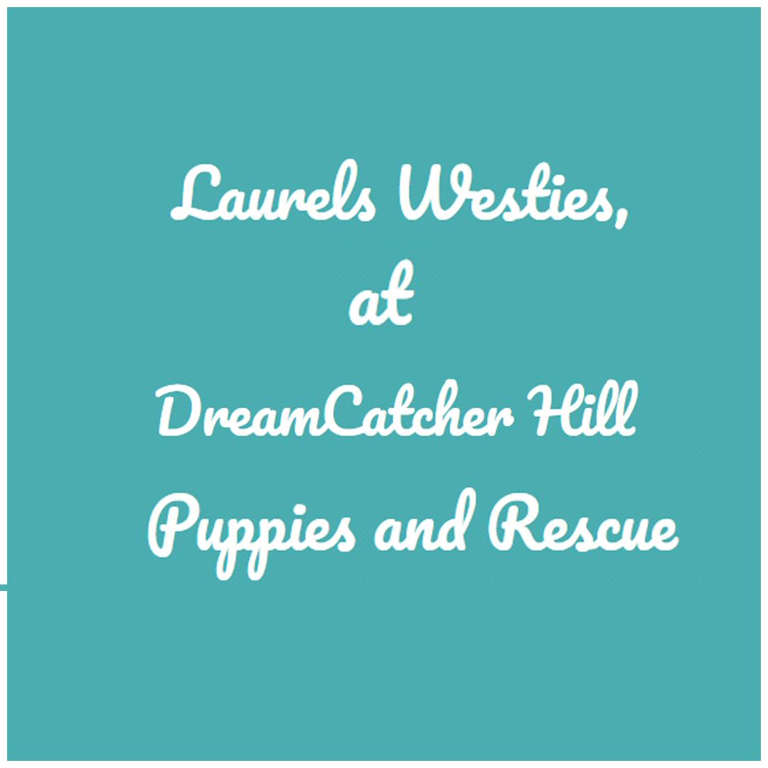 Dreamcatcher Hill Puppies And Rescue Pet Services Brighton Illinois
