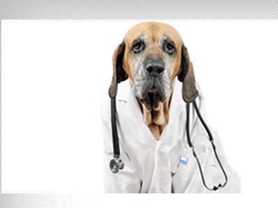 Clínica Veterinaria Son Dureta