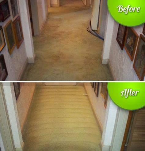 Carpet-Klenz