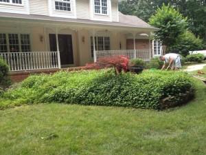 Image 6 | Green Zebra Landscaping
