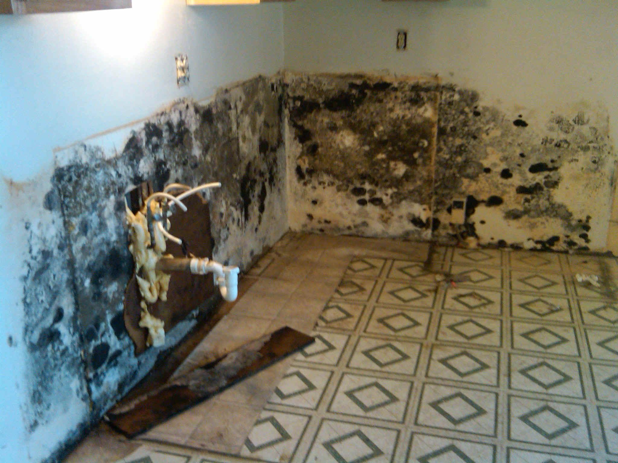 Od Construction Mold Remediation