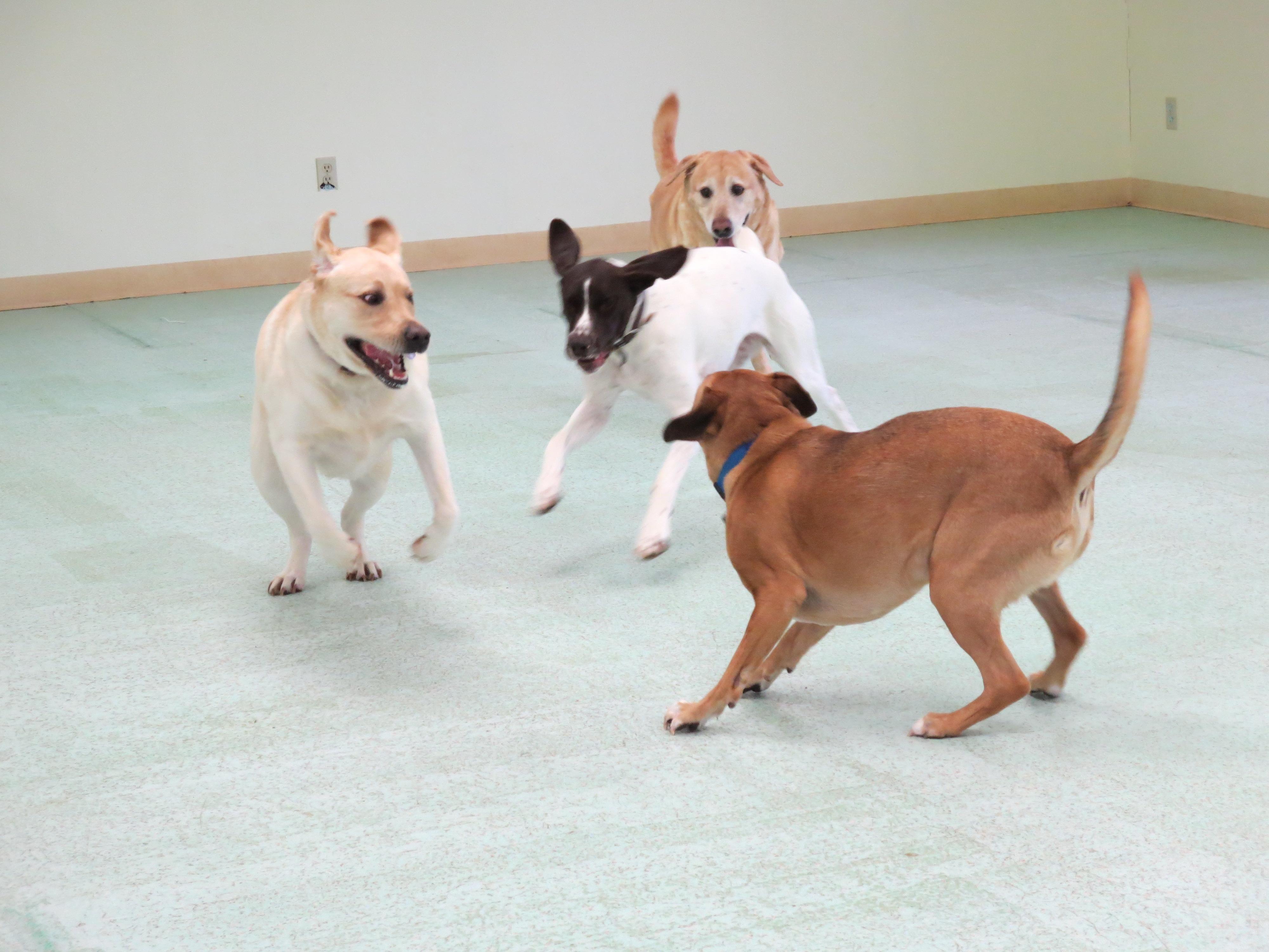 Dog Boarding Baltimore County
