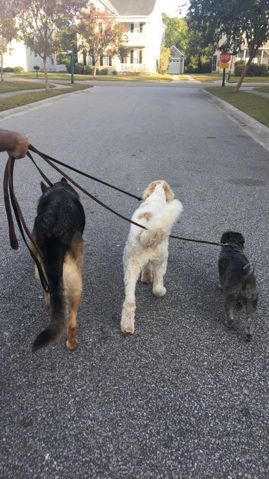Dog Training York Sc