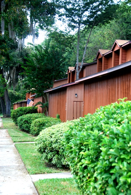Mr Tree And Lawn Service Gainesville Florida Fl