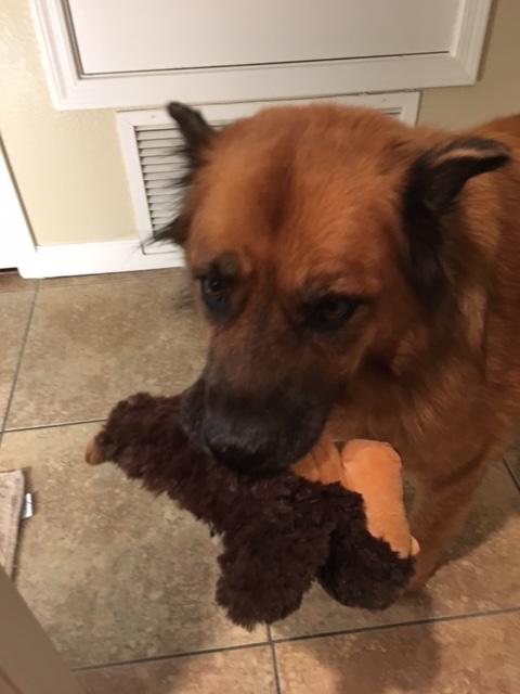 April's-Pet-Care-Pet-Sitting-Scottsdale-AZ-Dog-Walking