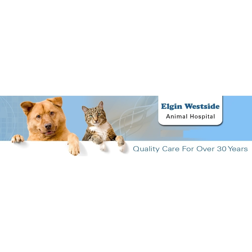 image of Elgin Westside Animal Hospital