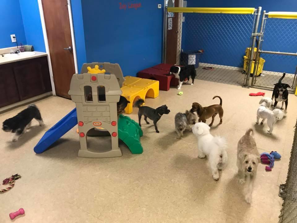 Dog Obedience Training Katy Tx