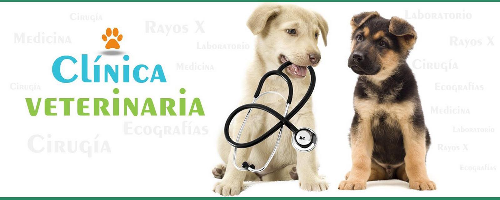 Clínica Veterinaria Añó