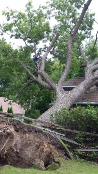 Images Wright's Tree Service