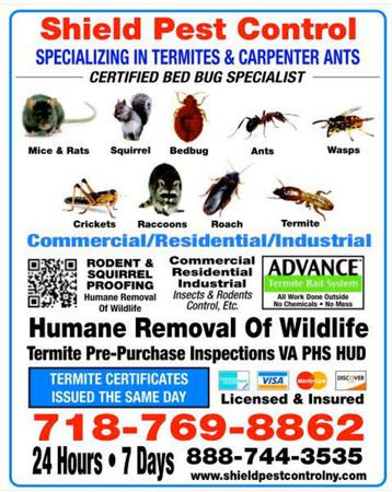We are here to rid your home or business of pests such as bed bugs any any other sting pest