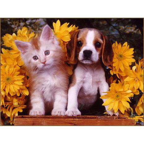 Garden Park Animal Clinic - W Palm Beach, FL 33410 - (561)623-6668   ShowMeLocal.com