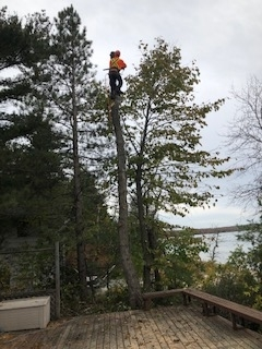 Images Cottage Country Tree Surgeons