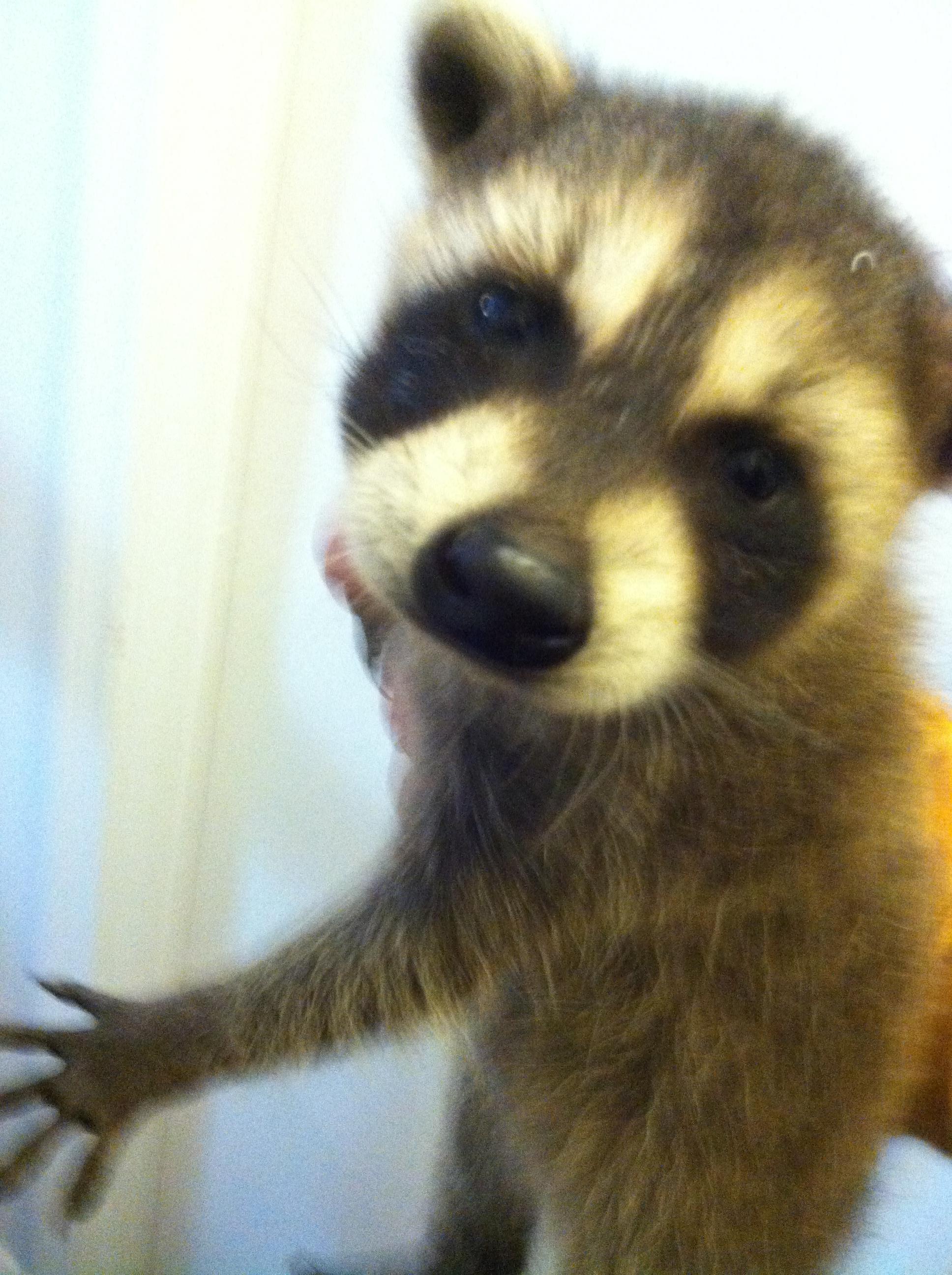Cajun Critter Removal Llc