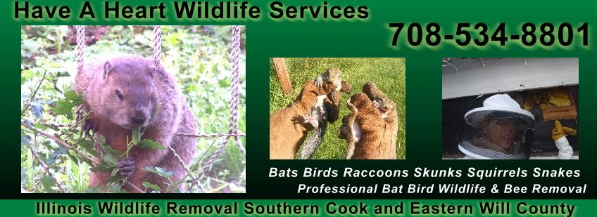 Have a Heart Wildlife Services