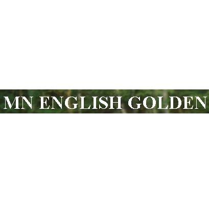 MN English Golden - Waconia, MN - Breeders